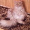 Аватар пользователя iamrussian29