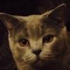 Аватар пользователя MrRG