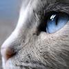 Аватар пользователя Melitopolskaya