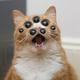 Аватар пользователя Barmotograf