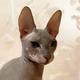 Аватар пользователя hasubraza