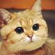 Аватар пользователя Kekc132
