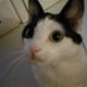 Аватар пользователя LeviPrudon