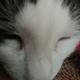 Аватар пользователя atashik5044