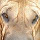 Аватар пользователя Vital114