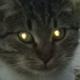 Аватар пользователя Thurmoraid