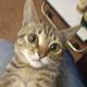 Аватар пользователя zidrex