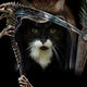 Аватар пользователя DeathCat