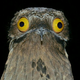 Аватар пользователя julebinez71