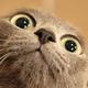 Аватар пользователя kotikvshoke