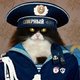Аватар пользователя empty904089
