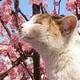 Аватар пользователя diana.mars