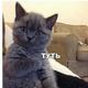 Аватар пользователя svoychelovechek