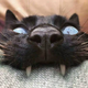 Аватар пользователя Mirelf
