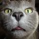 Аватар пользователя Udjin08