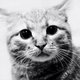 Аватар пользователя PS23
