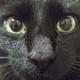 Аватар пользователя Kotyachka