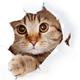 Аватар пользователя ItisTrap
