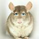 Аватар пользователя hegcduh