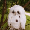 Аватар пользователя Gweename