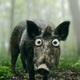 Аватар пользователя Kjlibin
