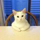 Аватар пользователя Sashik26