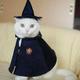 Аватар пользователя Pugovichkazayka