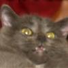 Аватар пользователя CaHBac