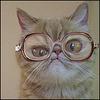 Аватар пользователя TutOnHamOn