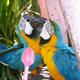 Аватар пользователя Dinoponerian