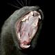 Аватар пользователя MEHAXEM
