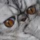 Аватар пользователя heinzheinz