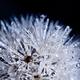 Аватар пользователя Iceflower