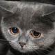 Аватар пользователя radgiv1