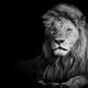 Аватар пользователя Levontos88