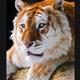 Аватар пользователя kfylsi