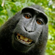 Аватар пользователя shkafSsekretom
