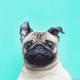 Аватар пользователя Bibikaz