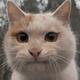 Аватар пользователя zayass