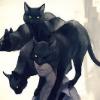 Аватар пользователя Catland