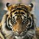 Аватар пользователя arhi1972