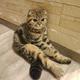 Аватар пользователя timon4x4