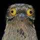 Аватар пользователя Vrottebenogi66