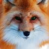 Аватар пользователя foxsa