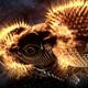 Аватар пользователя LexxOren