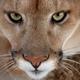 Аватар пользователя Okean77