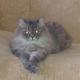 Аватар пользователя Yulia55