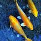 Аватар пользователя juliya.goldfish