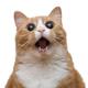 Аватар пользователя yoyoga