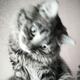 Аватар пользователя govinda